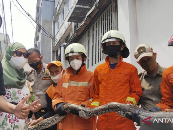 Ular Sanca Tiga Meter Hebohkan Warga Jakarta Barat