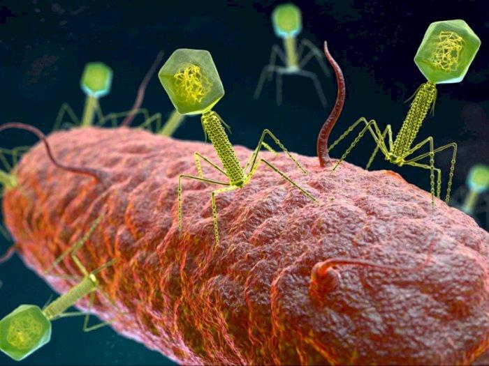 Bagaimana Jika Seluruh Virus di Dunia Musnah?