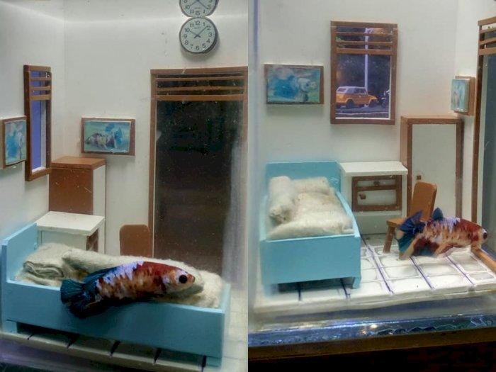 Viral Desain Akuarium Ikan Cupang Mirip Kost Minimalis, Netizen: Terlalu Kreatif!