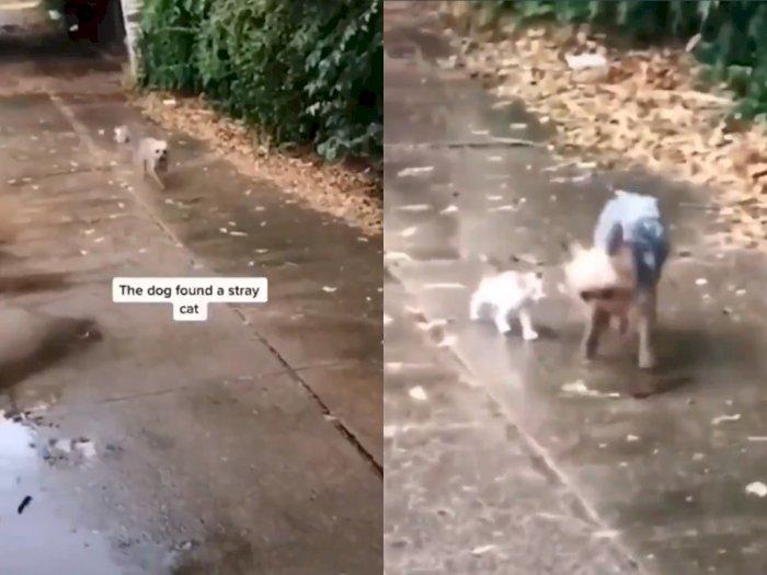 Anjing ini Ajak Pulang Anak Kucing yang Ditemukan di Jalan, Netizen: Duh Lucunya