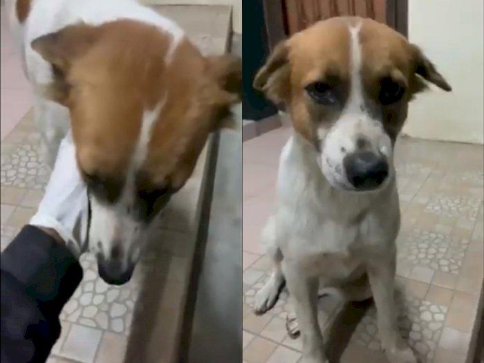 Anjing ini Pasang Muka Sedih Saat Akan Ditinggal Pergi, Netizen Ikut Mewek