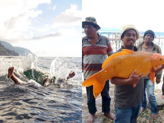 Danau Toba Menelan Korban Jiwa Lagi, Warganet Kaitkan dengan Penemuan Ikan Mas Raksasa