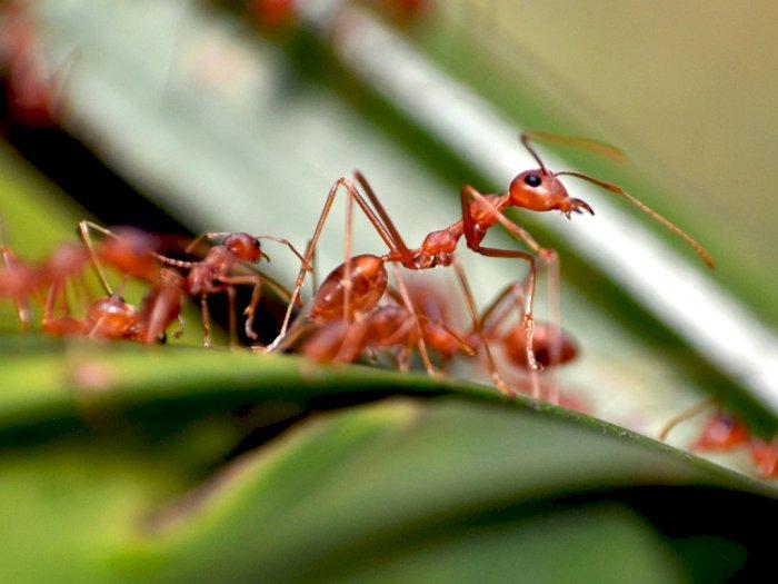 5 Makhluk Hidup yang Dapat Selamat dari Bencana Dunia
