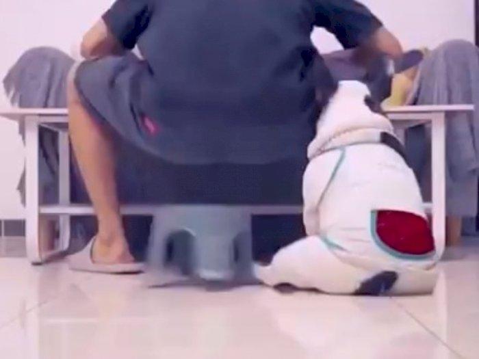Gara-gara Anjing, Pria Ini Terjungkal dan Gagal Makan Mie Instan