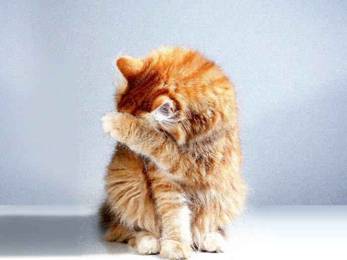 Viral! Kisah Tragis Majikan Kucing, Dikotori Setiap Hari