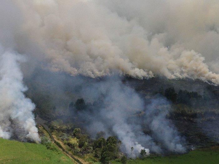 FOTO: Kebakaran Hutan dan Lahan (Karhutla) di Kalimantan Selatan