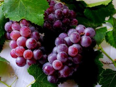 5 Manfaat Buah Anggur untuk Kecantikan, Salah Satunya Mengatasi Jerawat