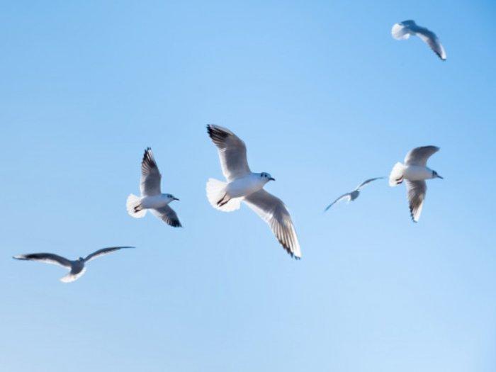 Benarkah Burung Dapat Melakukan Hibernasi?
