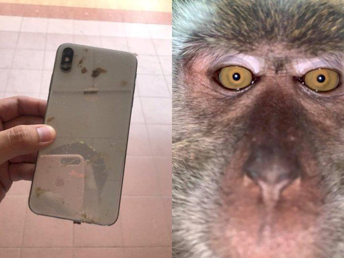 Hapenya Hilang dan Ketemu di Hutan, Pria ini Kaget Ada Foto Selfie Monyet di Dalamnya