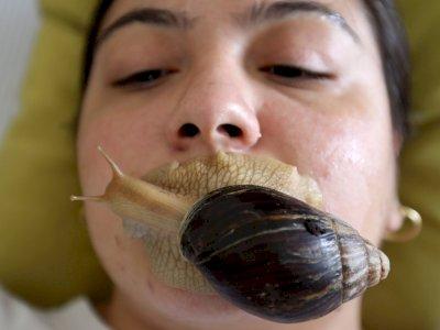 FOTO: Salon Kecantikan Yordania Menggunakan Siput untuk Perawatan Kulit