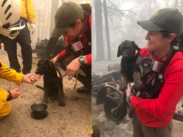 Pemadam Kebakaran ini Temukan Anjing Menggemaskan Selamat dari Kebakaran Hutan California