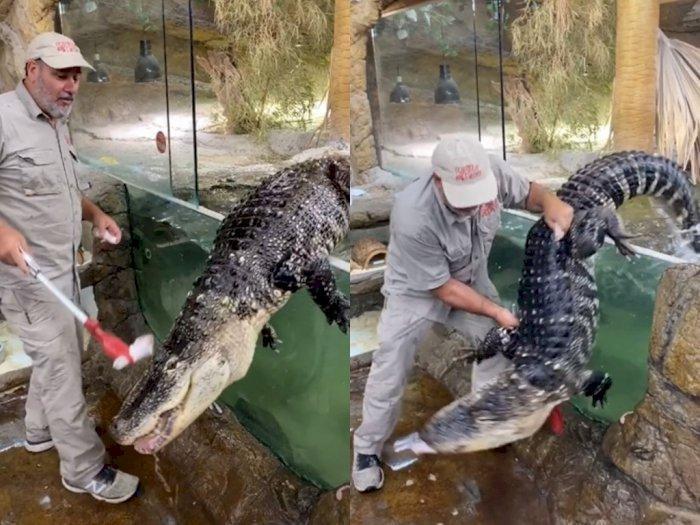 Pria ini dengan Santai Beri Makan Alligator yang Ganas, Bikin Netizen Melongo