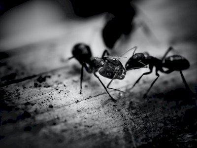 Perempuan Ini Ngerjain Semut Biar Dibilang Hoax