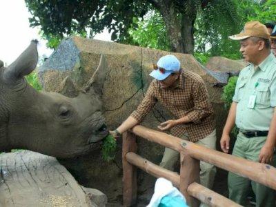 Populasi Tak Lebih dari 100 Ekor, Penyelamatan Badak Sumatera Libatkan Masyarakat