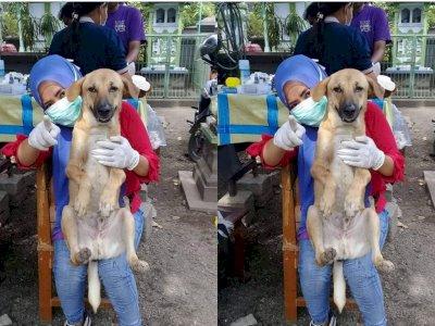 Selamatkan Anjing di Jalan, Wanita Berjilbab Ini Ditegur Orang, Begini Balasannya