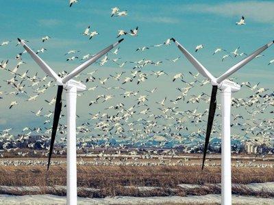 Turbin Angin yang Telah Membunuh Ratusan Ribu Burung dan Kelelawar