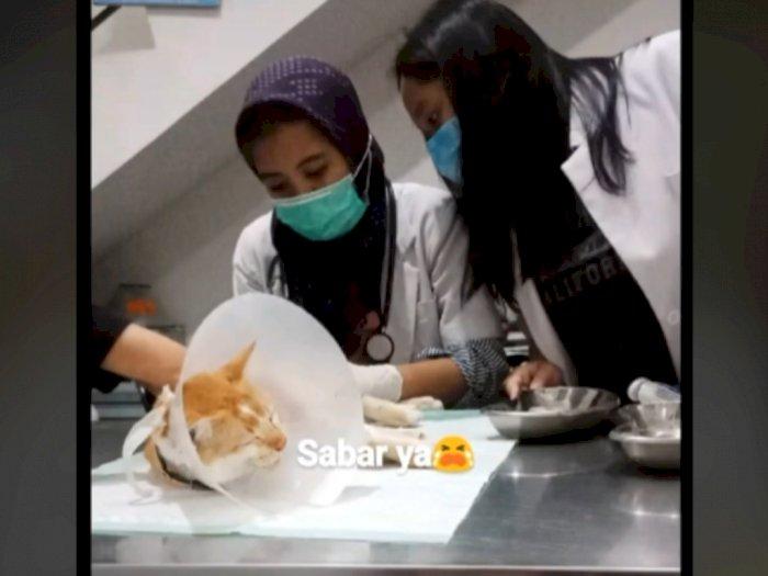 Viral Seekor Kucing Ditendang Tetangga Langsung Sakit Dibawa ke Dokter, Endingnya Sedih