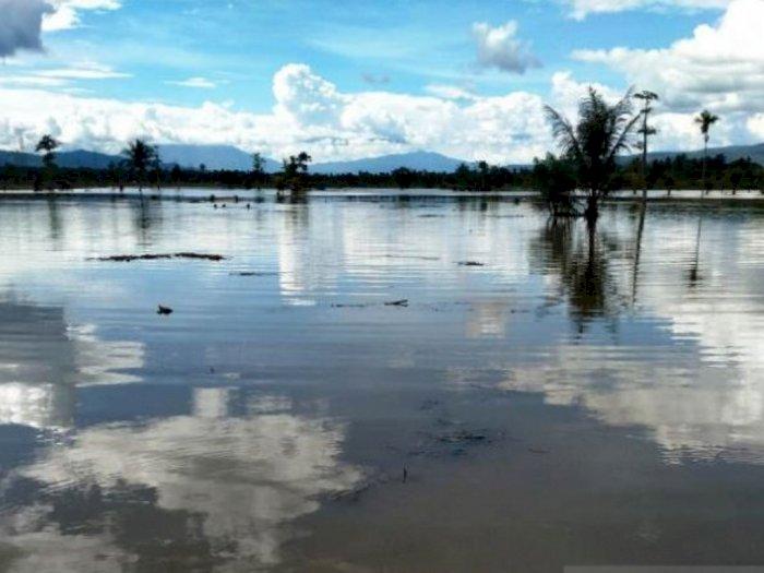 Puluhan Hektare Sawah Siap Tanam di Tapsel Terendam Banjir, Petani Gigit Jari