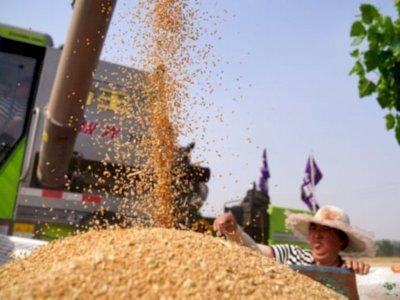 Antisipasi Krisis Pangan, Pemerintah Kembangkan Food Estate di Dua Provinsi