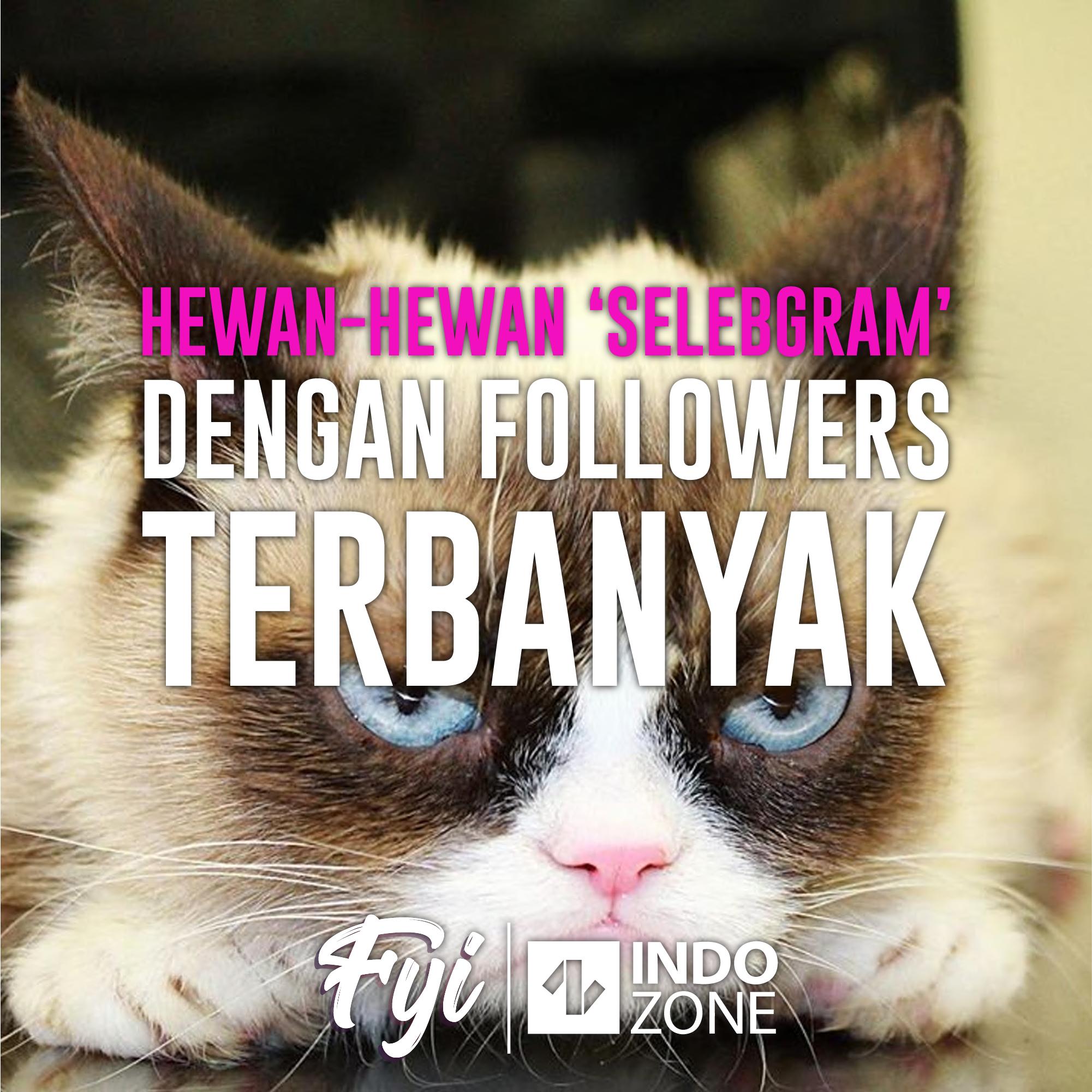 Hewan-Hewan 'Selebgram' dengan Followers Terbanyak