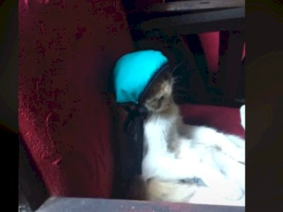 Cewek Dandani Kucingnya Pakai Topi, Ekspresi Kucingnya Sukses Bikin Netizen Ngakak