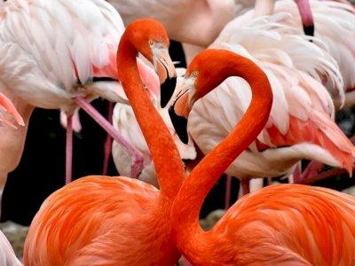 Kehidupan Emosional dan Pertemanan Burung Flamingo yang Setia