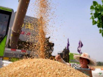 Bangun Pangan Nasional, Indonesia Bisa Maksimalkan Makanan Lokal