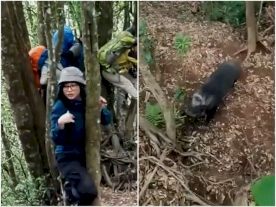 Viral Pendaki 'Dibegal' Babi Ganas di Hutan, Naik Pohon Demi Selamatkan Diri