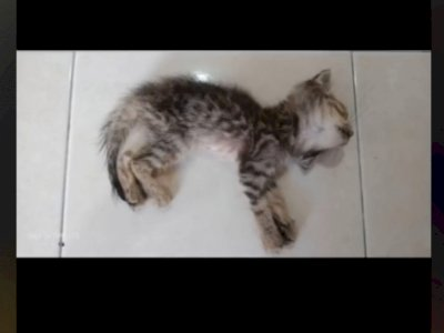 Seorang Pria Rawat Kucing Kecil Lumpuh, Badan Kurus Tak Terdaya, Endingnya Tak Terduga
