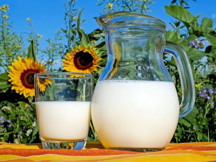 Berikut Alasan Mengapa Minum Susu Begitu Penting di Tengah Pandemi Saat Ini