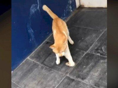 Sedih, Seekor Kucing Jalan dengan Kondisi Pincang, Ternyata karena Ulah Jahat Ini