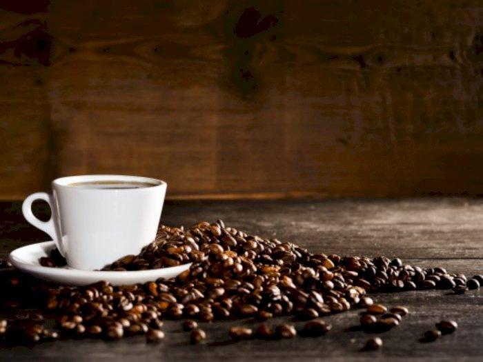 Mengenal Black Ivory Coffee, Kopi Termahal dari Kotoran Gajah