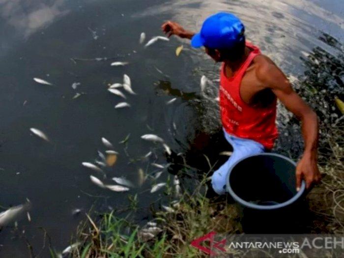 Gawat! DLHK Temukan Dugaan Pencemaran Akibat Limbah Perusahaan Kelapa Sawit