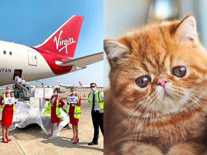 Maskapai Virgin Australia Larang Penumpang Bawa Hewan Berhidung Pesek, Kenapa?