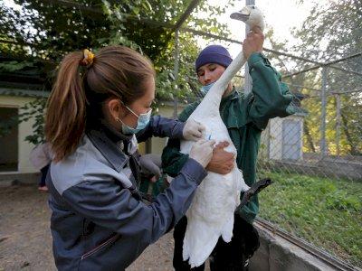 FOTO: Vaksinasi Unggas di Kebun Binatang di Almaty, Kazakhstan