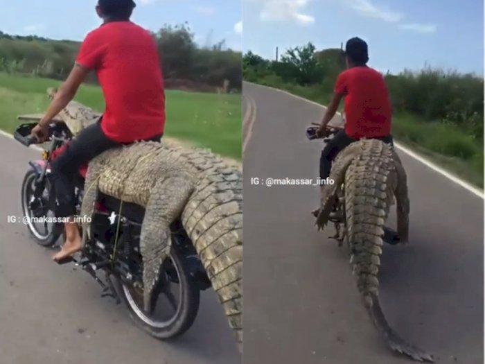 Greget! Pria ini Duduki Buaya yang Diletakkan Diatas Motornya, Bikin Netizen Melongo