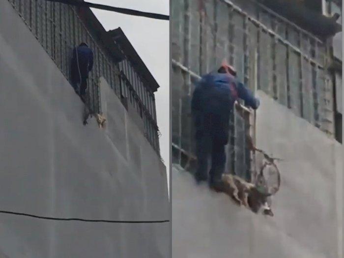 Detik-detik Aksi Heroik Saat Petugas Damkar yang Selamatkan Anjing di Lantai Empat