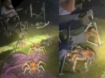 Mengerikan! Satu Keluarga Diserbu Kepiting Raksasa saat Berkemah, Reaksinya Tak Disangka