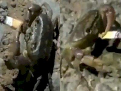 Aneh! Kepiting Ini Terekam Kamera Seolah Sedang Merokok, Ternyata Ini yang Terjadi