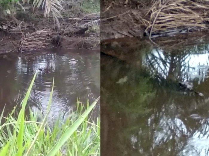Hendak Mancing Ikan di Sungai, Pria di Labuhanbatu Malah Dapat Buaya, Begini Videonya