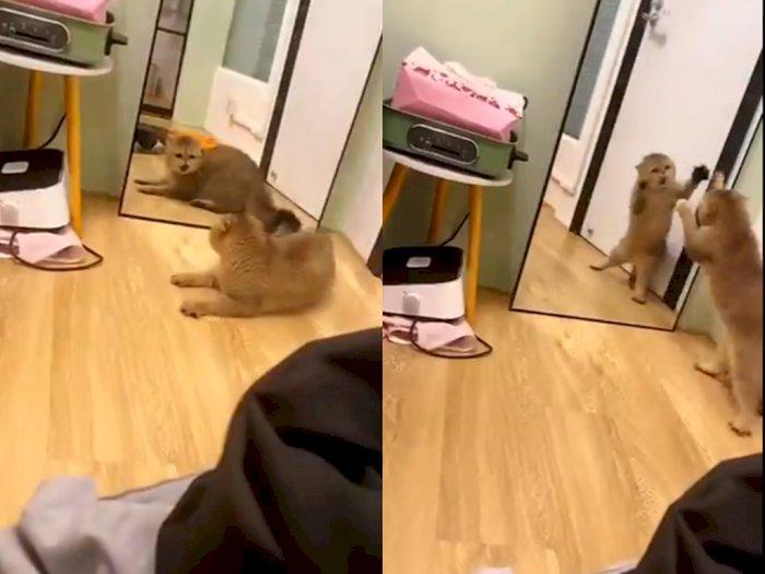 Video Kucing yang Berantam dengan Cermin Saat Liat Dirinya Sendiri, Bikin Netizen Gemas