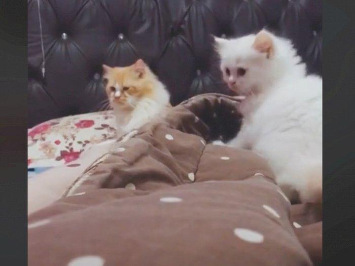 Kucing Jantan Ini Tak Mau Didekati Anaknya, si Anak Tak Menyerah, Endingnya Tak Disangka