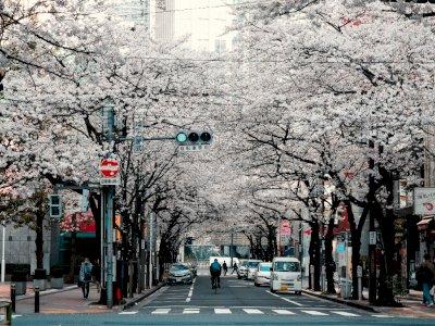 Jepang Berencana Sambut Kembali Wisatawan Internasional Mulai 1 Oktober