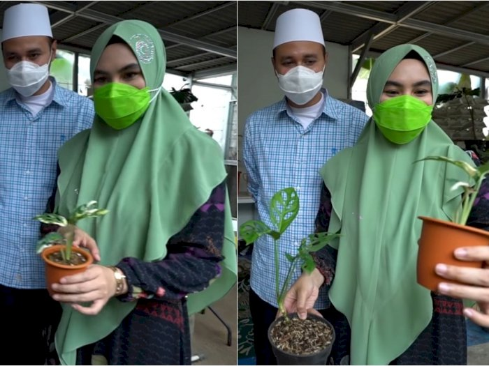 Berburu Tanaman Hias Kartika Putri Syok Dengar Harga Janda Bolong Sentuh Angka Rp90 Juta Indozone Id