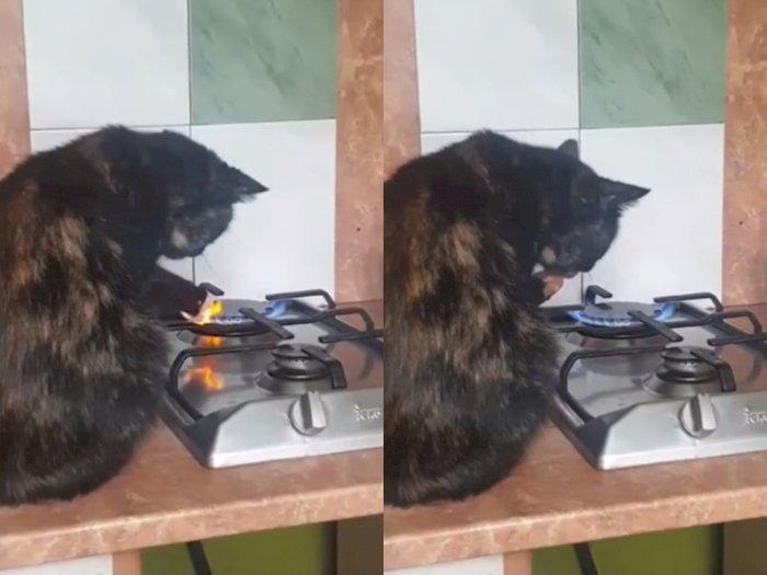 Video Kucing Saat Main Api Kompor, Netizen: Kucingnya Ahli Debus