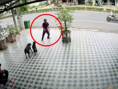 Pria Diserbu Anjing cuma Lawan Pakai Tangan Kosong, Berhasil Selamat dengan 'Jurus' Ini