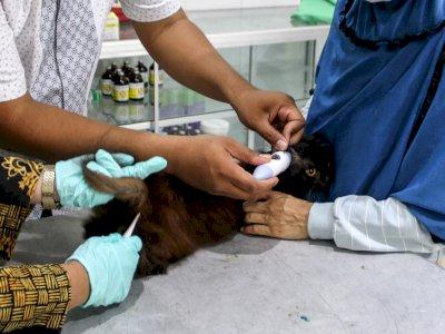 FOTO: Vaksin Rabies Gratis Untuk Hewan Peliharaan