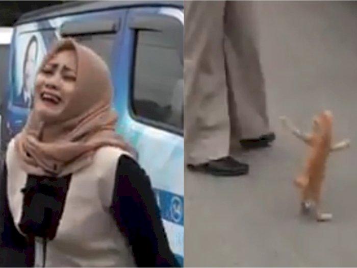 Aksi Anak Kucing Oren yang Iseng Ganggu Reporter Wanita, Netizen: Gemas Banget!
