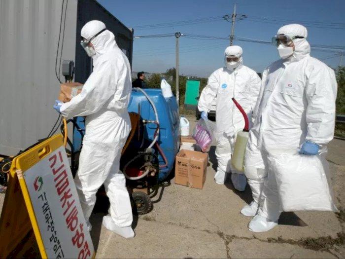 Terkait Demam Babi Afrika, Jerman Dikabarkan Temukan 3 Kasus Baru