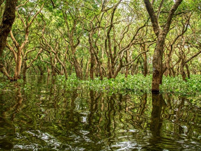 Canangkan Program 'Replanting' Lahan Mangrove, Luhut: Hampir 1 Juta Hektare Lahan Rusak